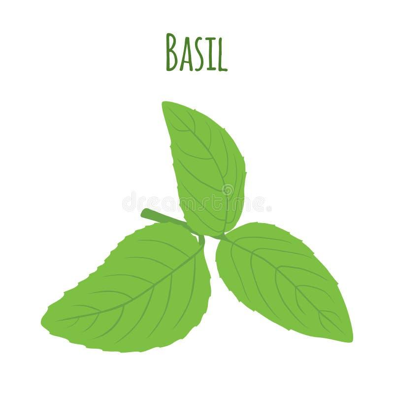 Deux lames de basilic Condiment de fines herbes végétarien Illustration de vecteur illustration de vecteur