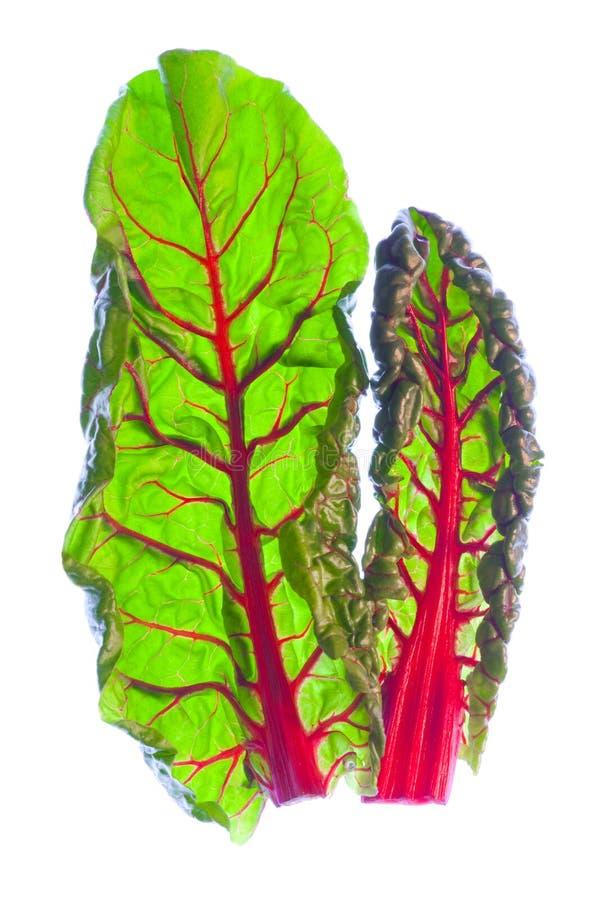 Deux lames rouges organiques d'épinards photographie stock libre de droits
