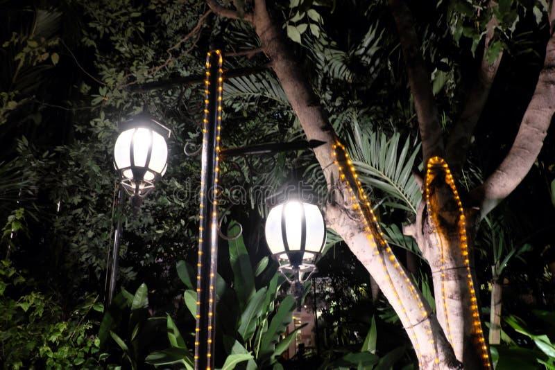Deux lanternes forgées de cru illuminent les feuilles de l'arbre Émanation légère lumineuse des réverbères photo stock