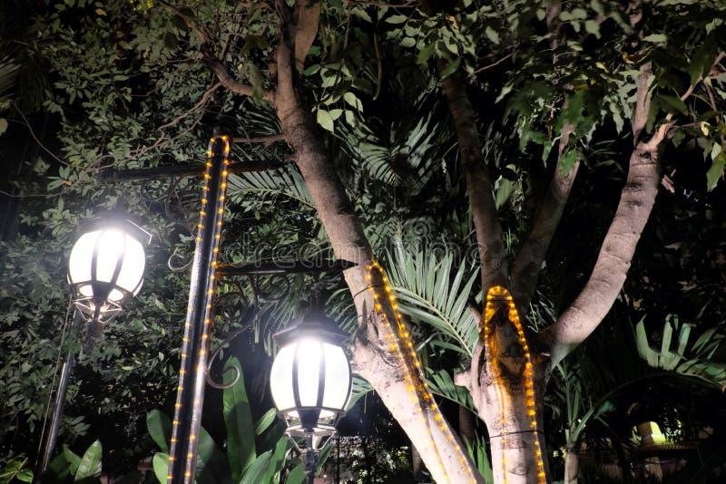 Deux lanternes forg?es de cru illuminent les feuilles de l'arbre ?manation l?g?re lumineuse des r?verb?res photographie stock libre de droits