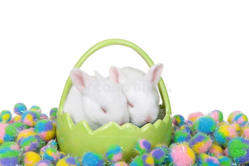 Deux lapins de bébé dormant dans le panier vert image libre de droits