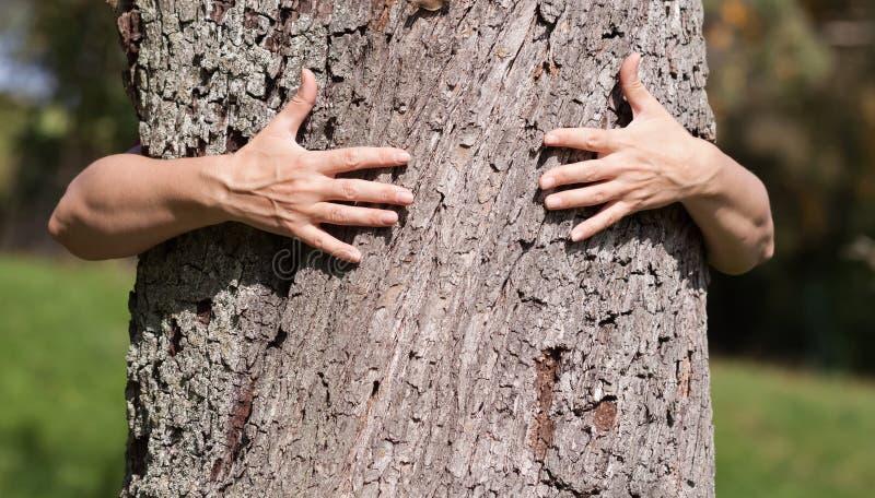 Deux mains étreignant un été d'arbre photo libre de droits