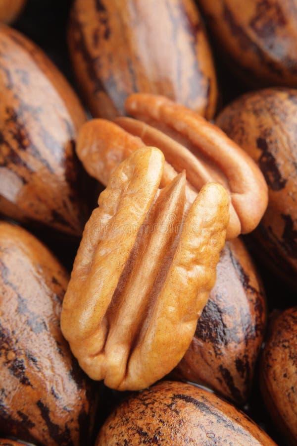 Deux moitiés de noix de pécan sur le fond photo libre de droits