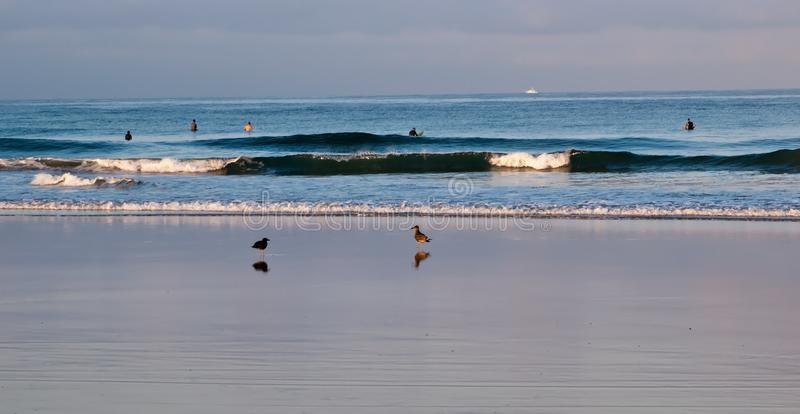 Deux mouettes dans le ressac avec des personnes promeuvent dans l'eau dans l'océan pacifique photo stock
