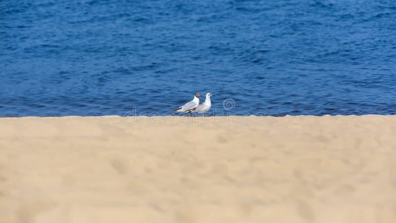 Deux mouettes sur la côte photographie stock libre de droits