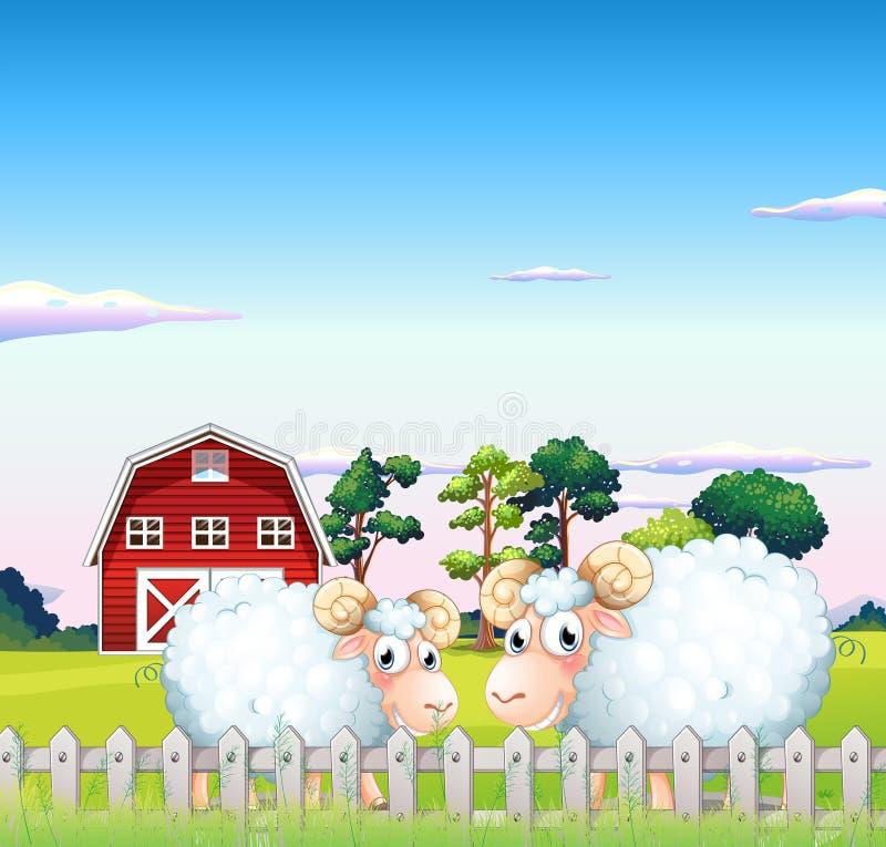 Deux moutons à l'intérieur de la barrière avec une grange au fond illustration stock