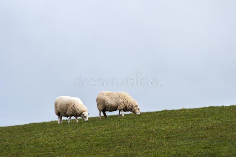 Deux moutons sur la colline photos stock