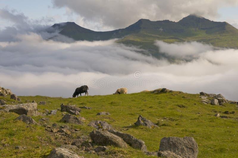 Deux moutons sur le fond bleu de falaise de mer et d'herbe photos libres de droits