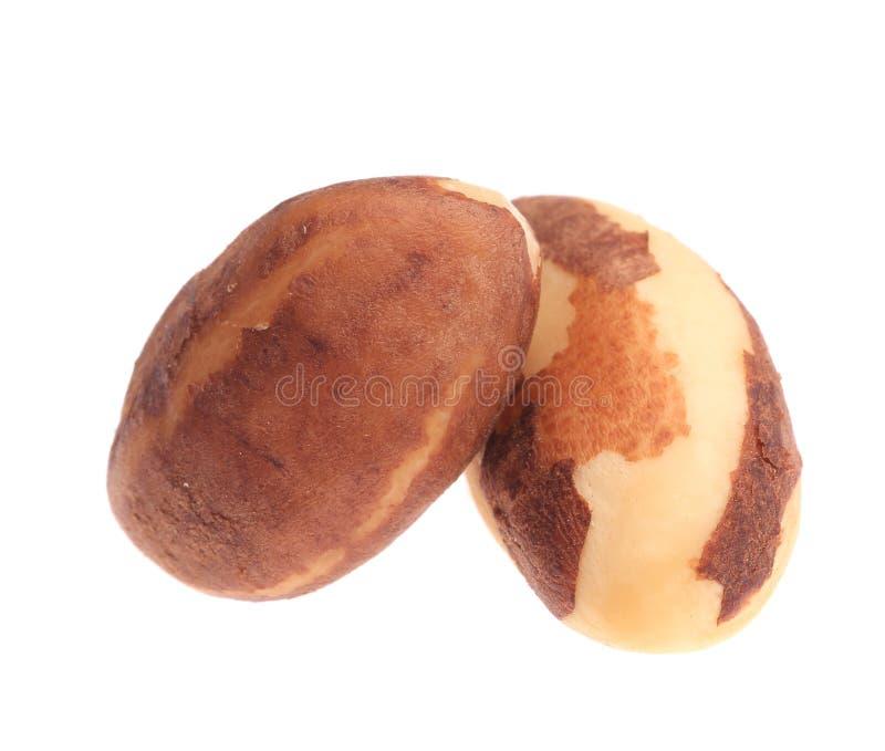 Deux noix du brésil. image stock