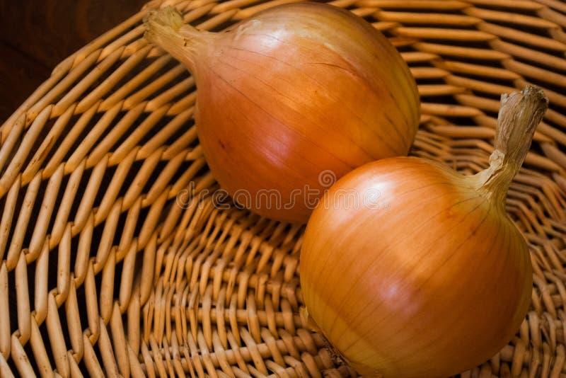 Deux oignons organiques photos stock