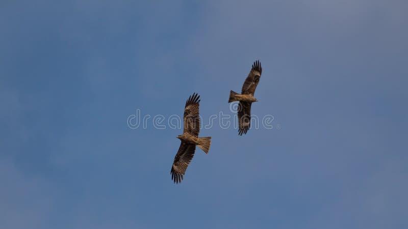 Deux oiseaux photographie stock