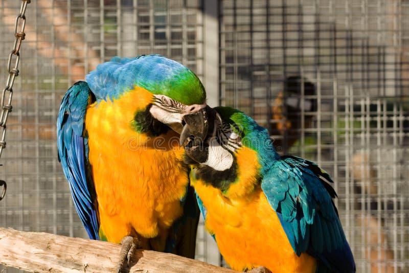 Deux oiseaux d'amour images libres de droits