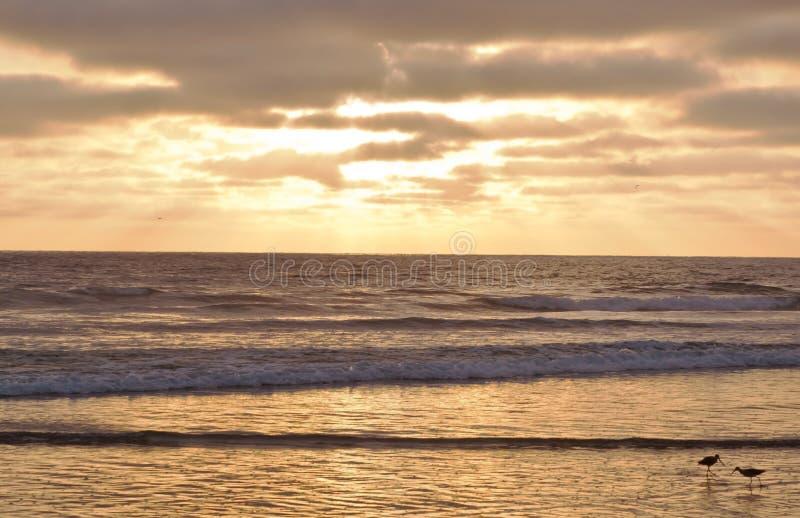 Deux oiseaux de barge dans le ressac au coucher du soleil photos libres de droits