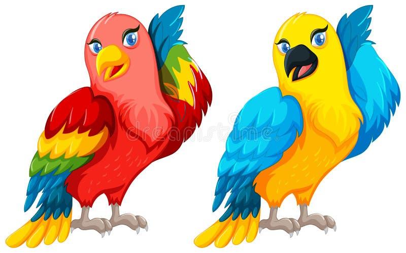 Deux oiseaux de perroquet avec la plume colorée illustration libre de droits