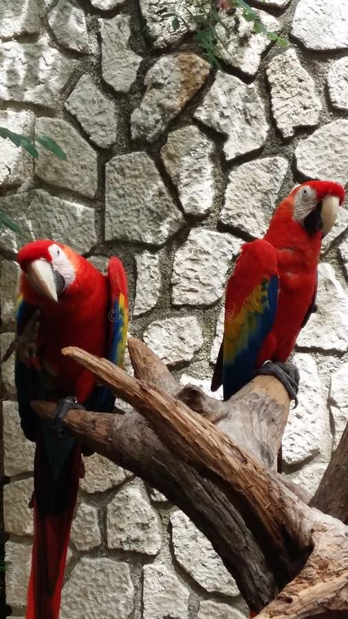 Deux oiseaux sur la branche photos libres de droits