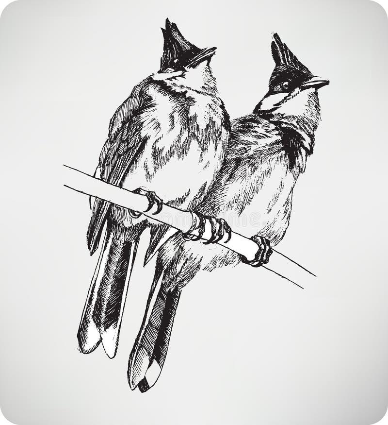 Deux oiseaux sur la branche, dessin de main, illustration de vecteur illustration libre de droits