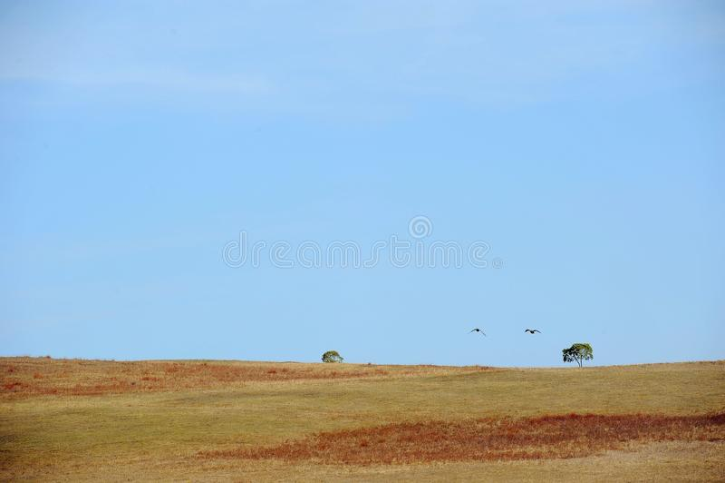 Deux oiseaux volant et deux arbres dans le domaine sous le ciel images libres de droits
