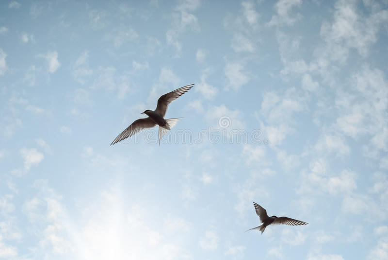 Deux oiseaux volent dans le ciel bleu-clair atteignant pour le soleil images stock