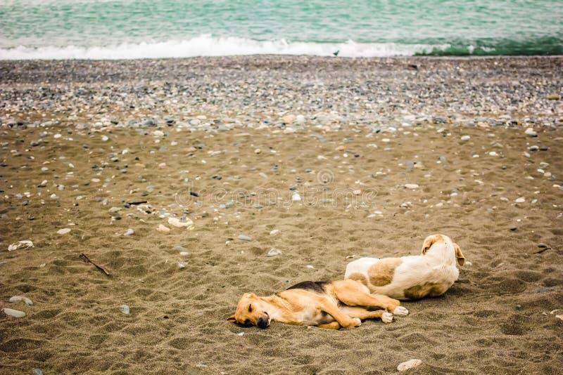 Deux ont repéré le chien fatigué repose le mensonge sur une plage sablonneuse par la mer images stock