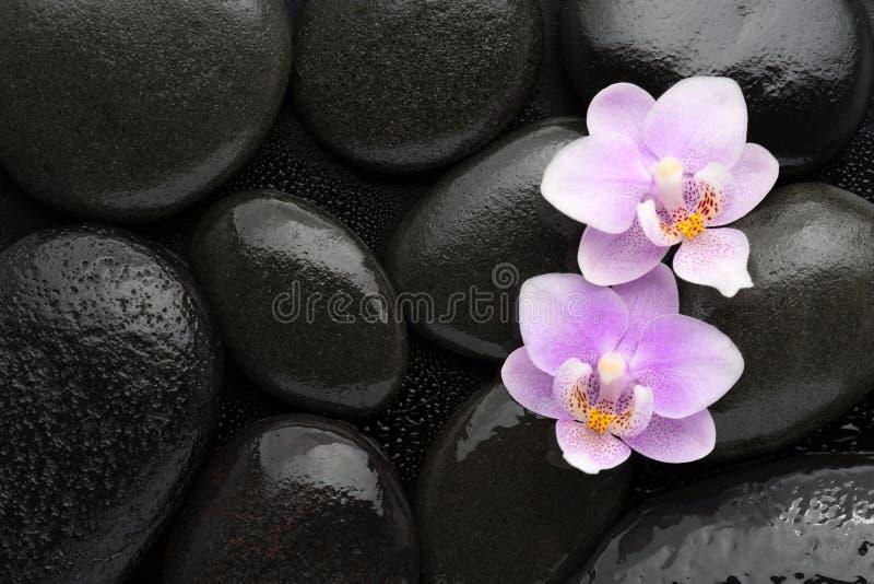 Deux orchidées rose-clair se trouvant sur les pierres noires humides Visualisé de ci-avant Concept de station thermale photographie stock libre de droits