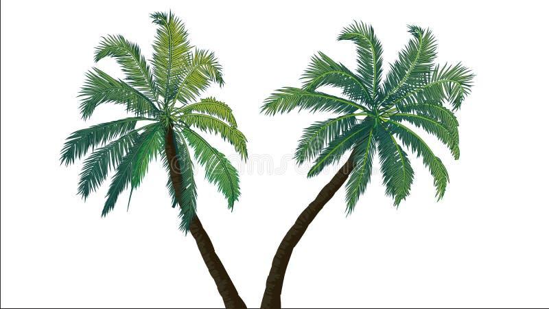 Deux palmiers illustration libre de droits