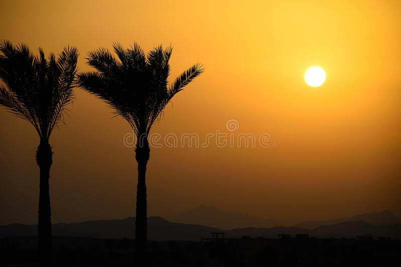 Deux palmiers dans le coucher du soleil image stock