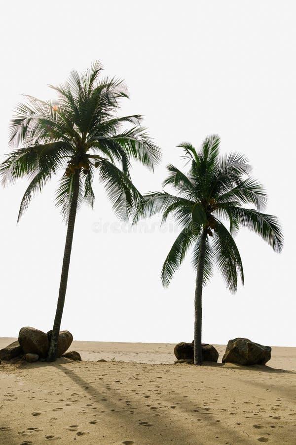 Deux palmiers de noix de coco image stock