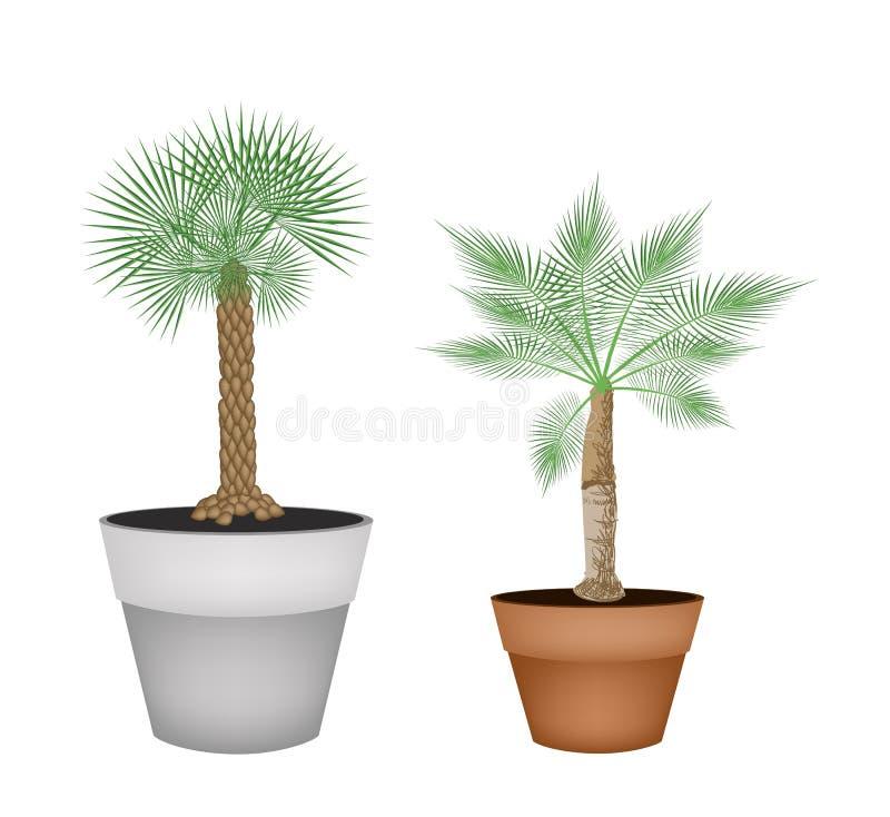 Deux palmiers isométriques dans des pots de terre cuite illustration de vecteur