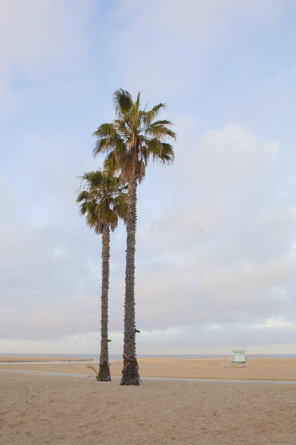Deux palmiers sur la plage paisible image stock