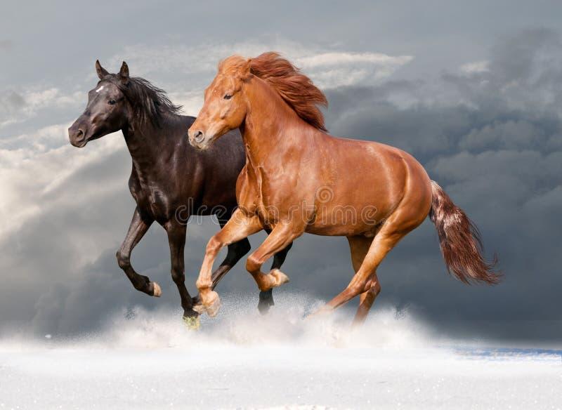 Deux passages de chevaux photos stock