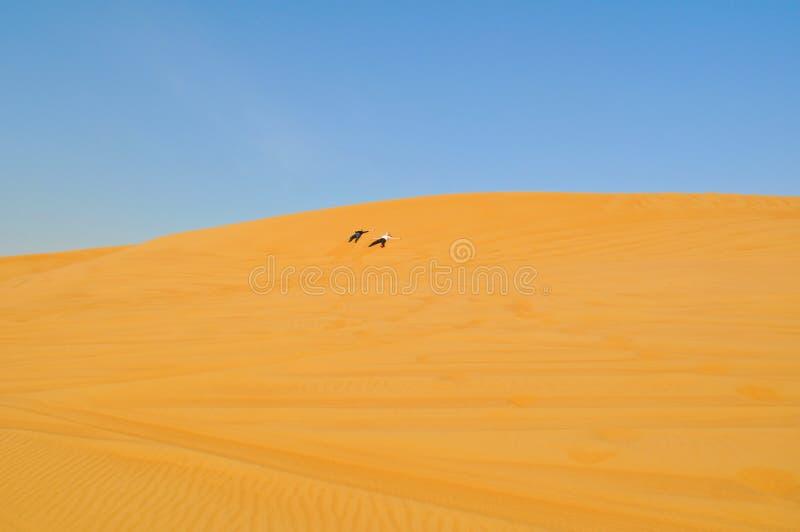 Deux personnes traversent le désert Vacances actives à Dubaï Désert arénacé illimité photographie stock libre de droits