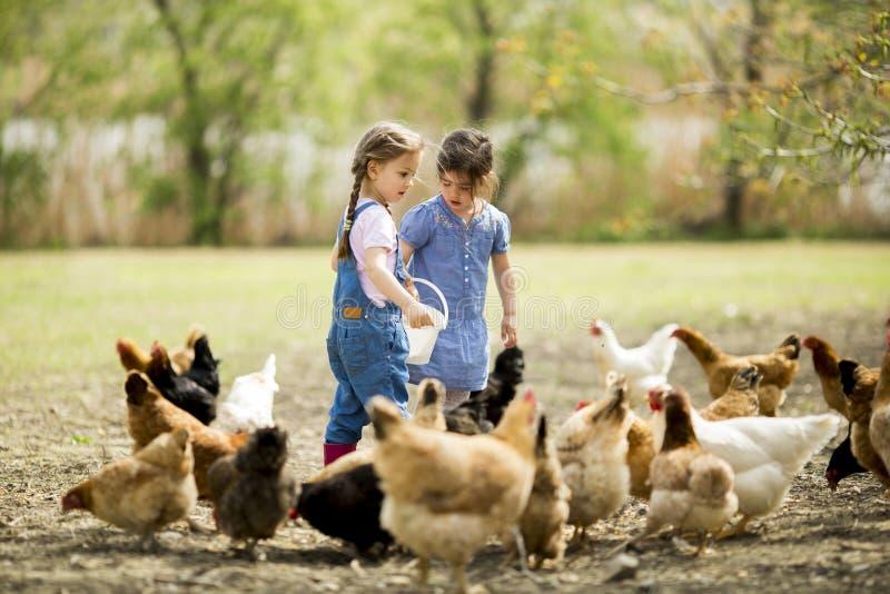 Deux petites filles alimentant des poulets images stock