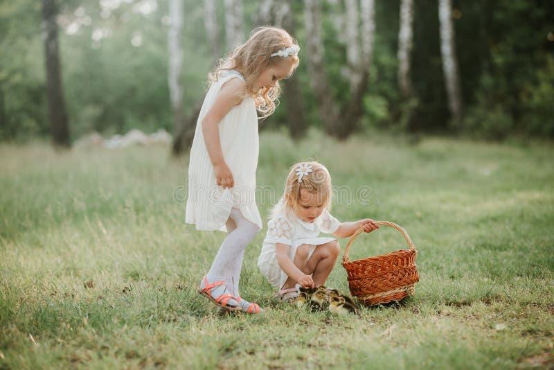 Deux petites filles au coucher du soleil avec de beaux canetons deux petites filles jouant avec des canards en parc photographie stock