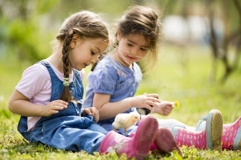 Deux petites filles avec des poulets photos libres de droits