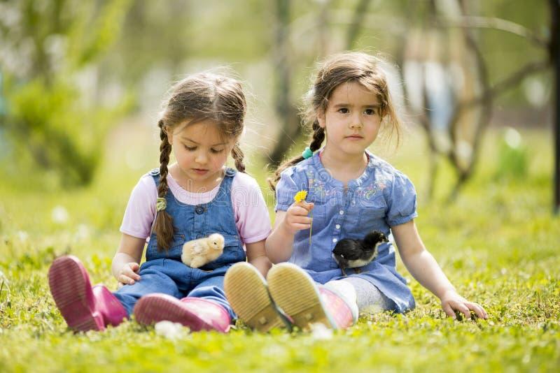Deux petites filles avec des poulets photographie stock libre de droits