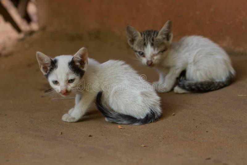 Deux petits chatons sales recherchent un papa image stock