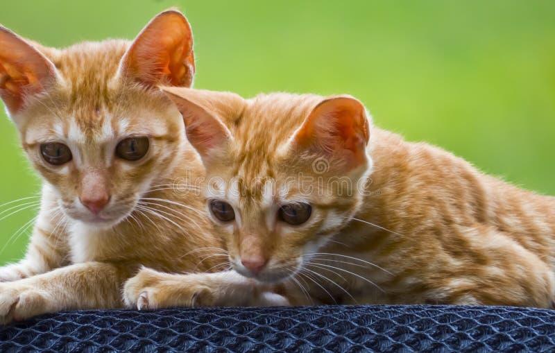 Deux petits chats images stock