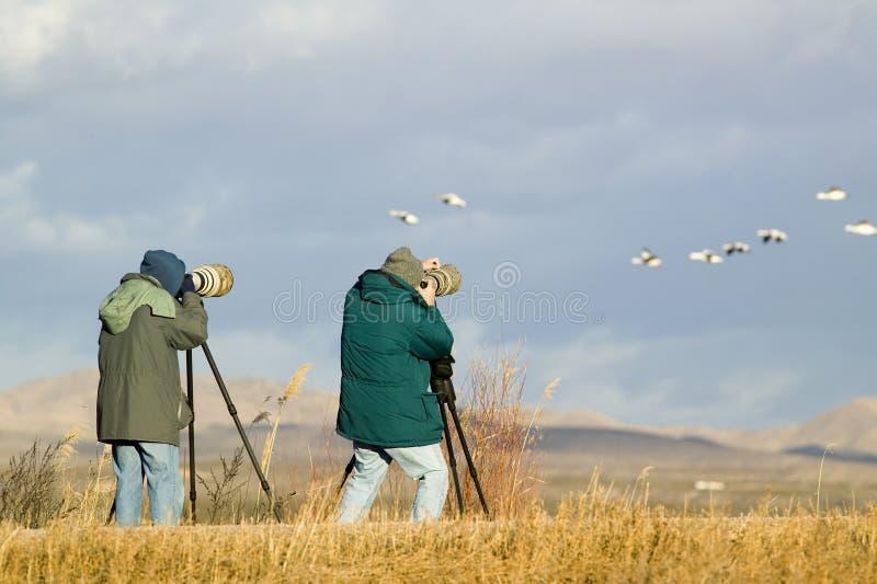 Deux photographes avec le téléobjectif photographient des grues de Sandhill et des oies de neige à la réserve de Bosque del Apach photos libres de droits