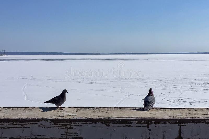 Deux pigeons se reposant ? c?t? du fond du paysage marin d'hiver images libres de droits