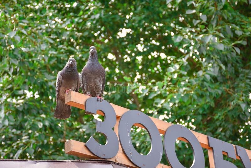 Deux pigeons sur le signe photo libre de droits