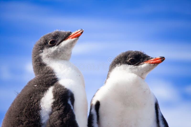 Deux pingouins en Antarctique photos stock