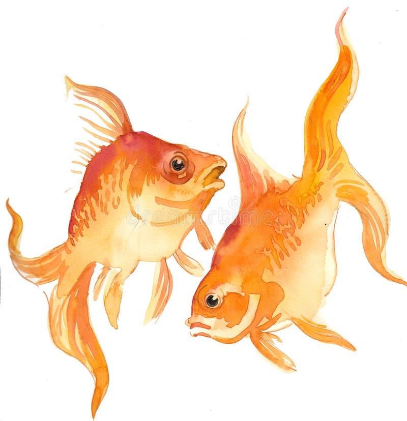 Deux poissons d'or illustration libre de droits