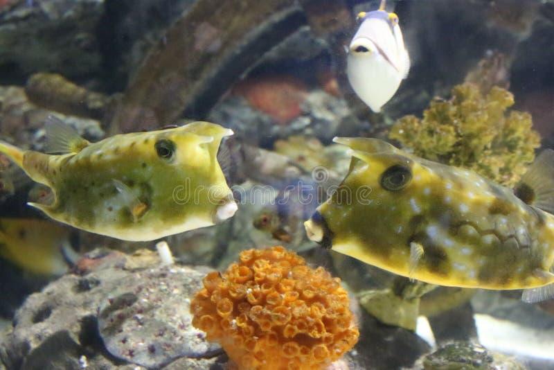 Deux poissons s'aime image stock