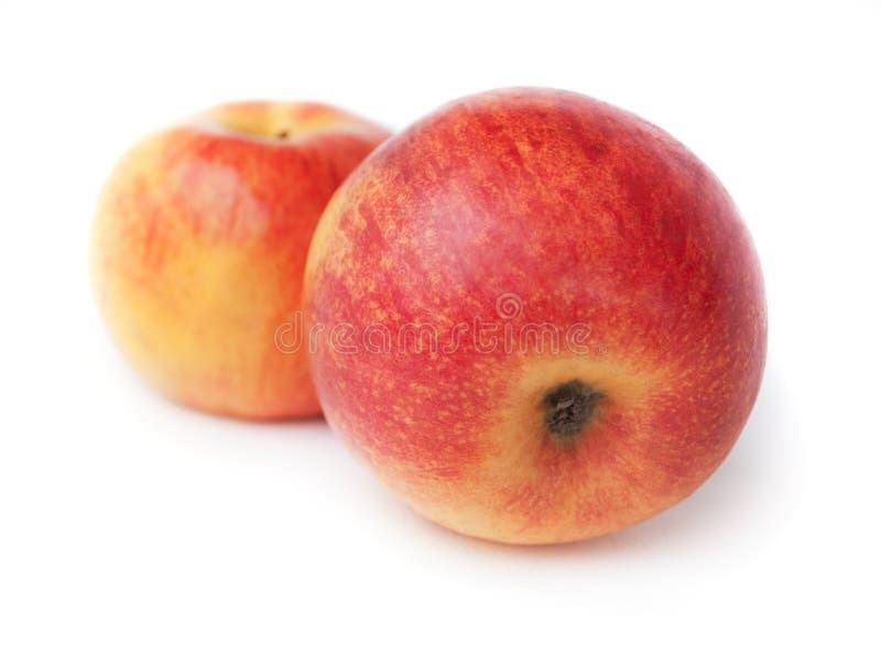 Deux pommes photographie stock