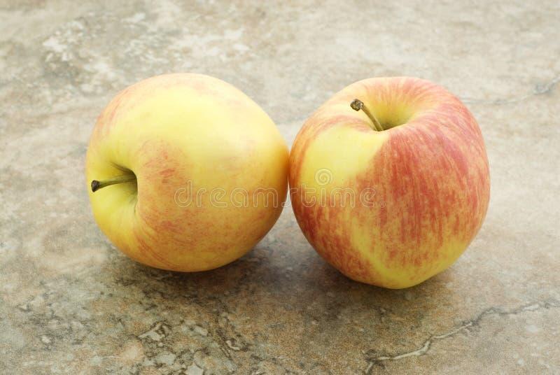 Deux pommes de gala photo libre de droits