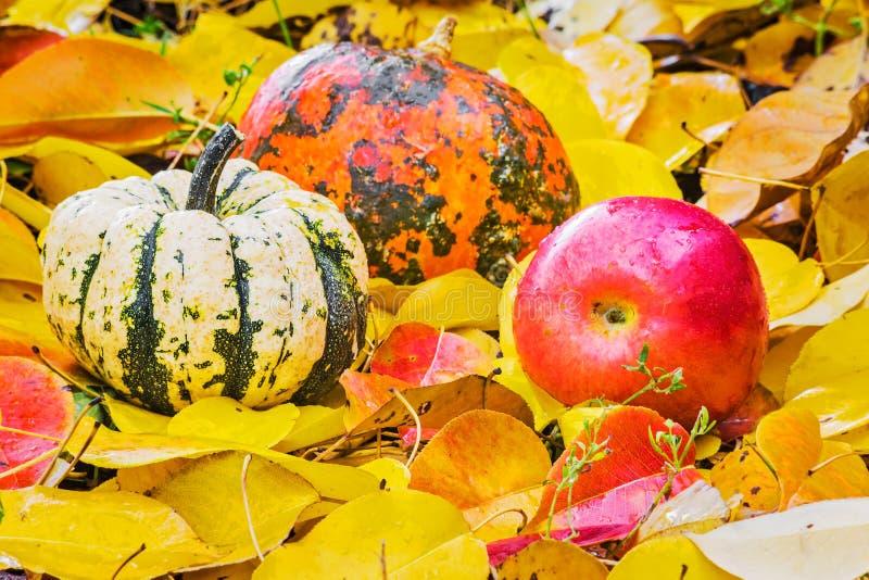 Deux potiron et pomme sur des feuilles d'automne image libre de droits
