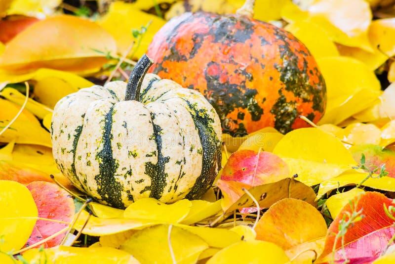 Deux potirons sur des feuilles d'automne photos stock
