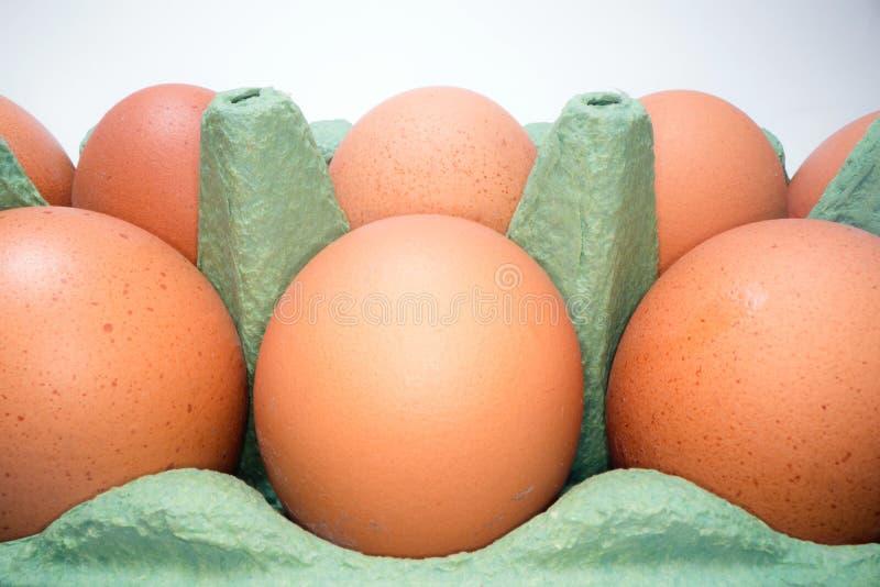 Deux rangées des oeufs bruns dans la boîte en carton sur le fond blanc Oeufs de poulet dans le panier à vendre image stock