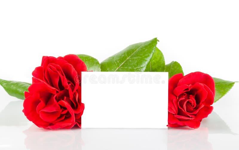 Deux roses rouges et carte cadeaux vierge pour le texte sur le fond blanc images libres de droits