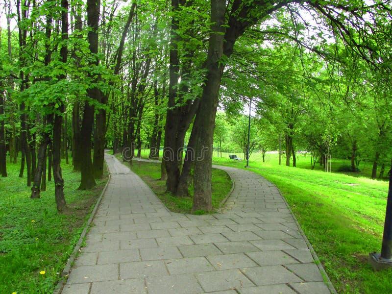 Deux routes verdissent l'été de parc photo libre de droits